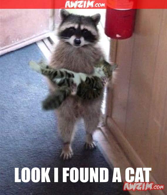found a cat