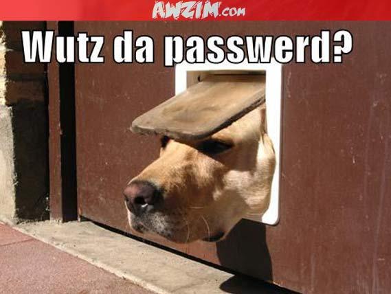 wutz da passwerd