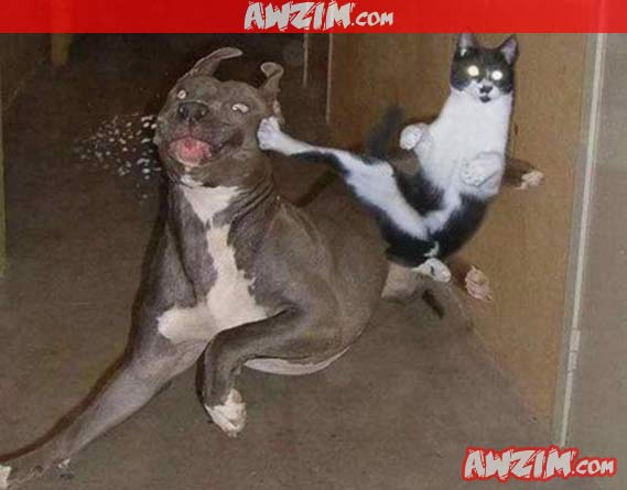 cat kicks dog